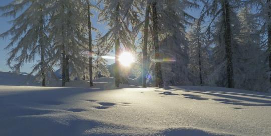 Waldhaus Bettmeralp Winter